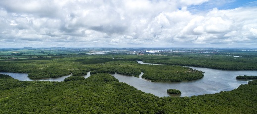 Brazil river and rainforest